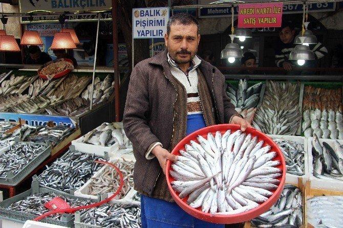 Kar ve soğuk hava balık fiyatlarını yüzde 15 attırdı