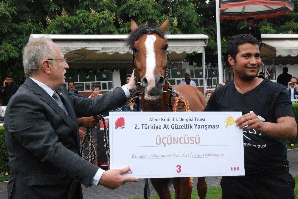 Atlar bu kez güzellik için yarıştı
