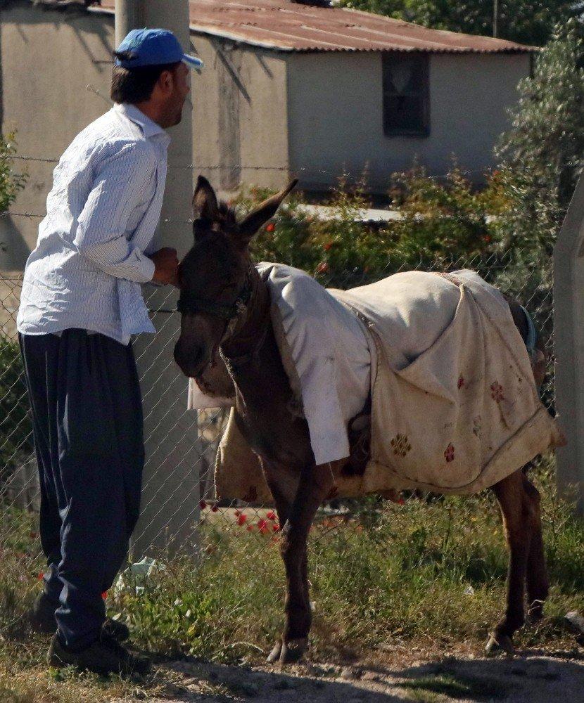 Adana'da eşek kaçtı, sahibi kovaladı