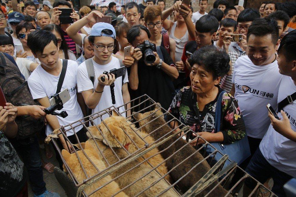 Çin'de 'Yulin Köpek Eti Festivali' yasaklandı