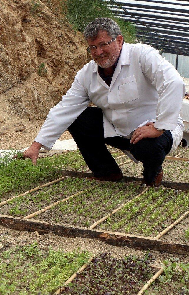 Kazdağları'nda yerli tohumları güçlendiriyorlar