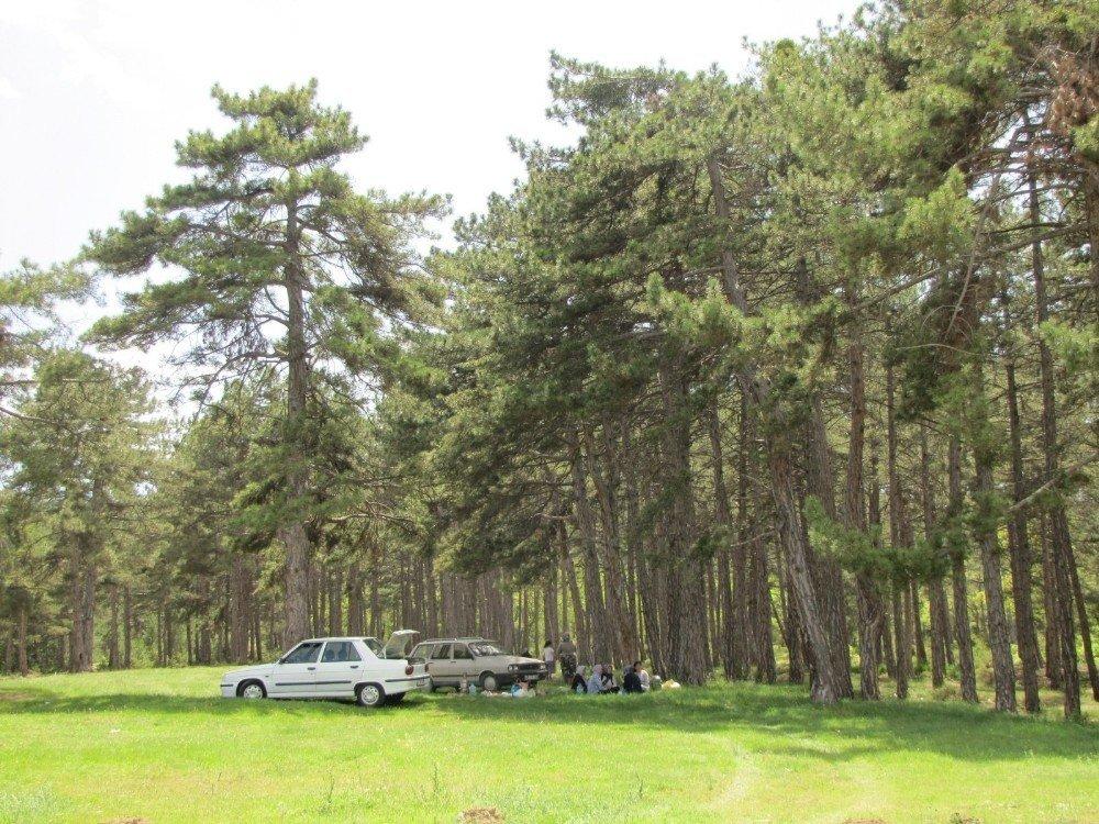 Doğa harikası piknik alanı sahipsiz