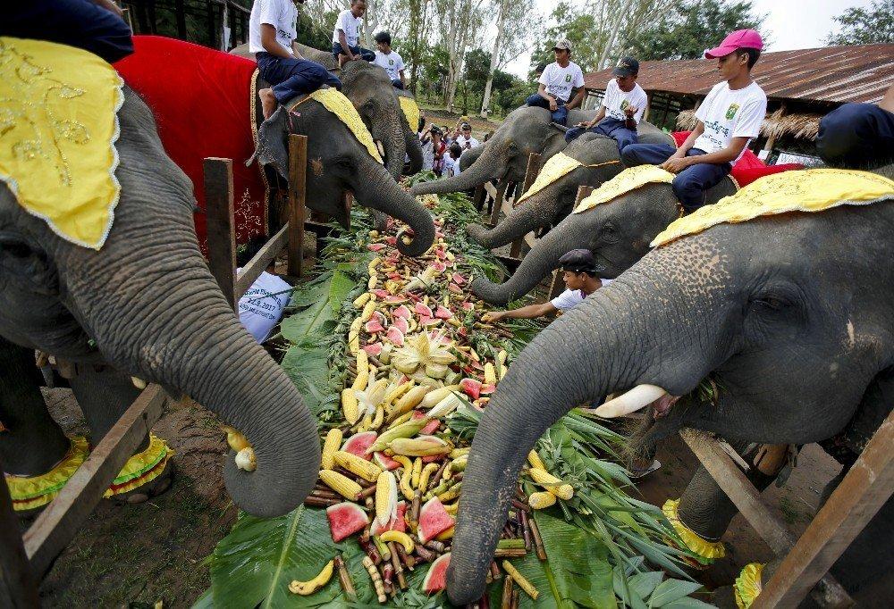Dünya fil günü kutlandı ile ilgili görsel sonucu
