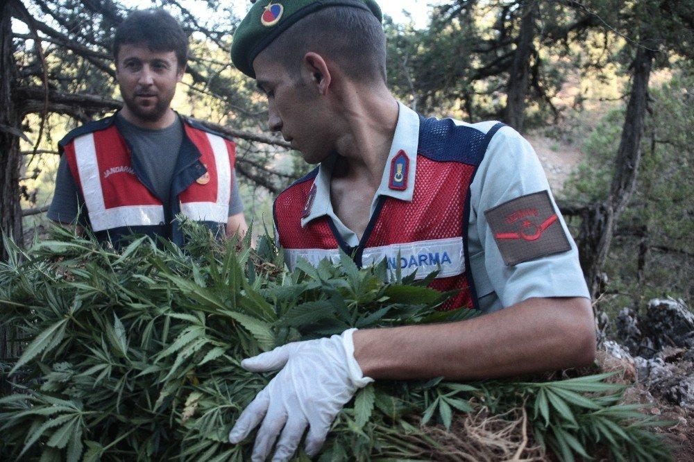 Adana'da 1 Yılda 48, 6 Milyonluk Uyuşturucu Ele Geçirildi ile ilgili görsel sonucu