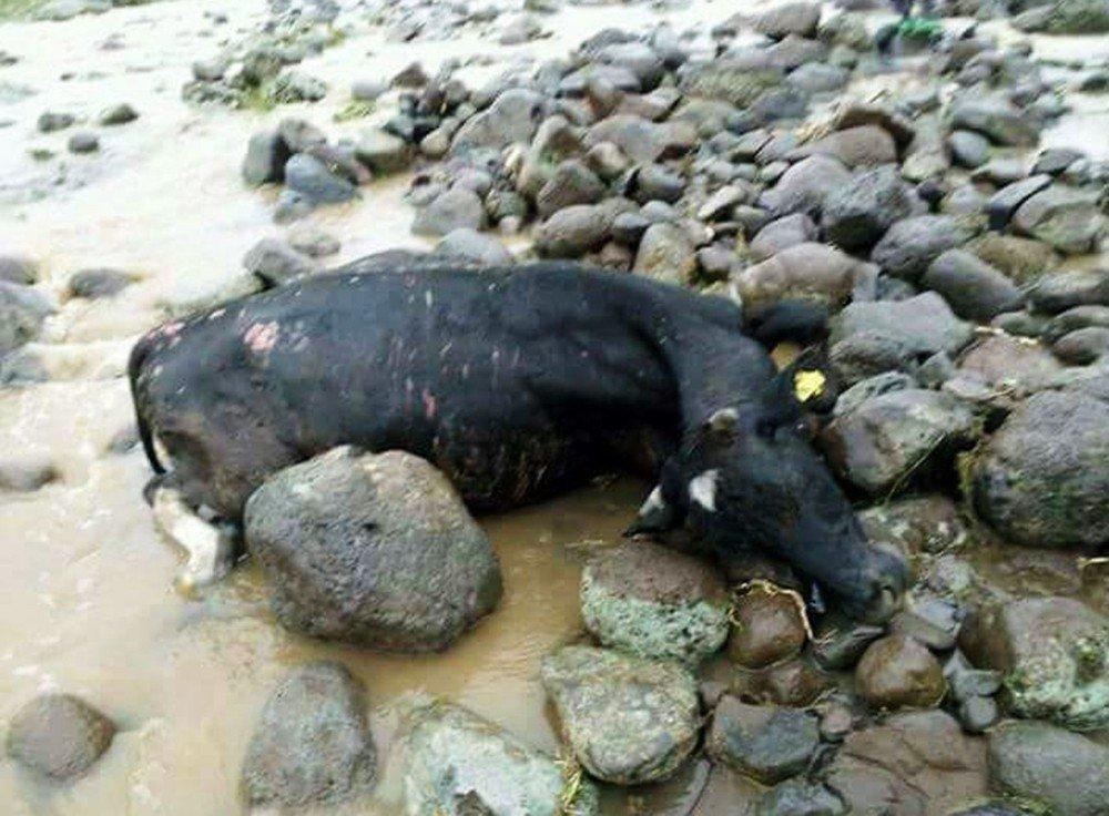Ergani'de dere taştı: 5 hayvan telef oldu