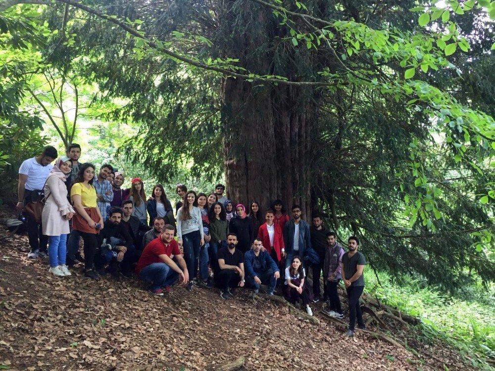 Öğretmen adayları 4113 yaşındaki porsuk ağacını tanıttı