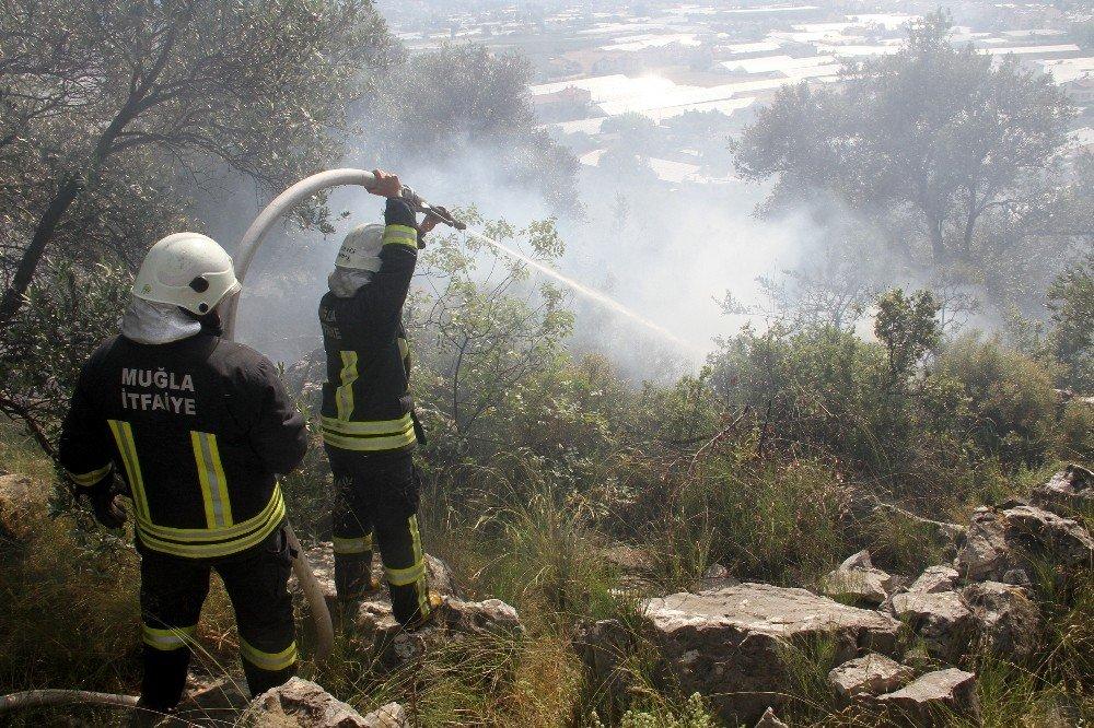 Fethiye'de Zeytinlik Alanda Yangın