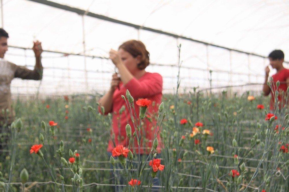 Kesme çiçeğe sıcak hava darbesi