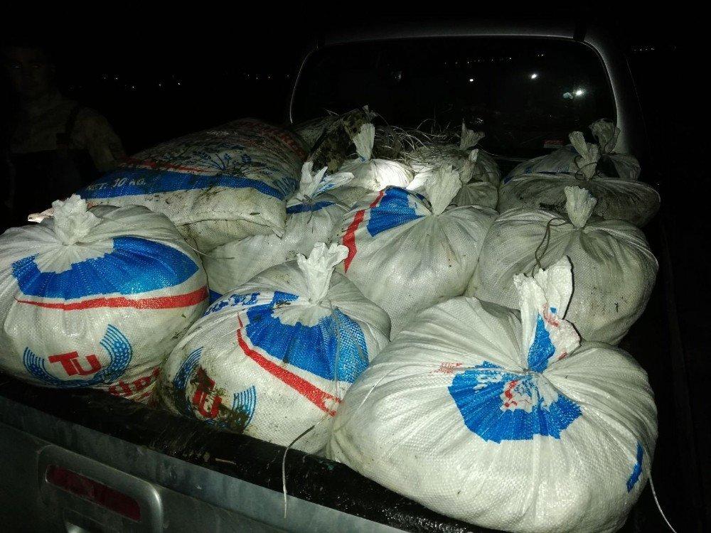 Erciş'te 900 kilo kaçak balık ele geçirildi