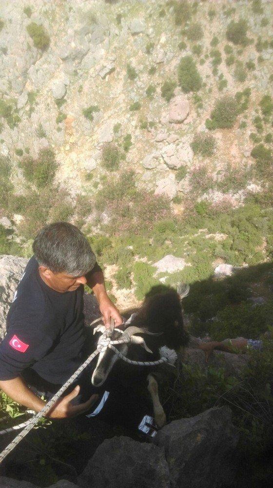 Kayalıklarda keçi kurtarma operasyonu
