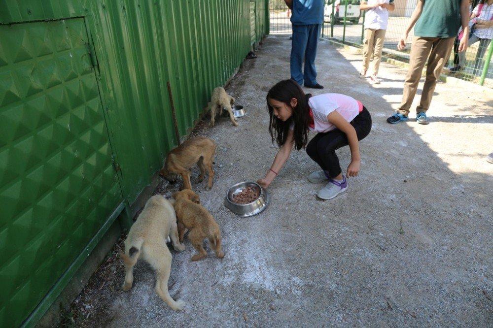 Öğrenciler yavru köpekleri elleriyle besledi