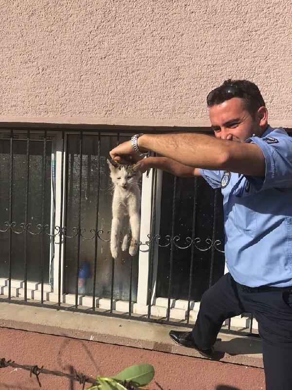 Konya'da pencerede sıkışan kediyi zabıta kurtardı