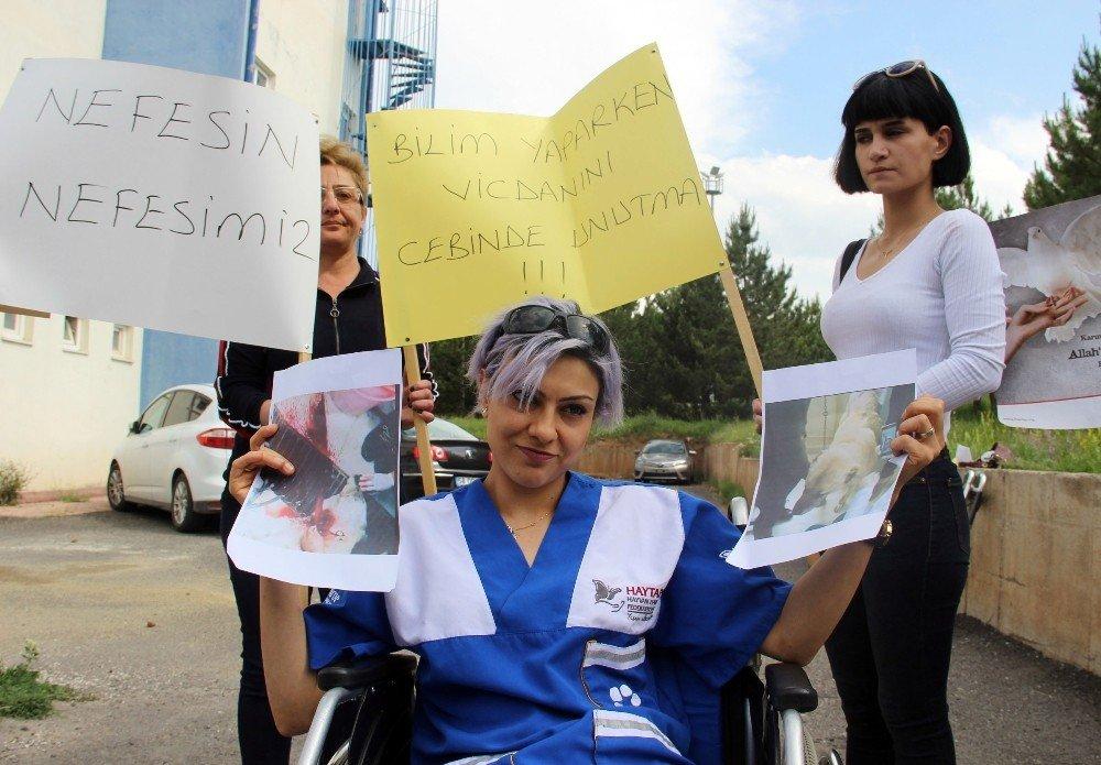 Sivas'ta Veterinerlik Fakültesinde ders için sokak köpeğinin katledilmesine tepki