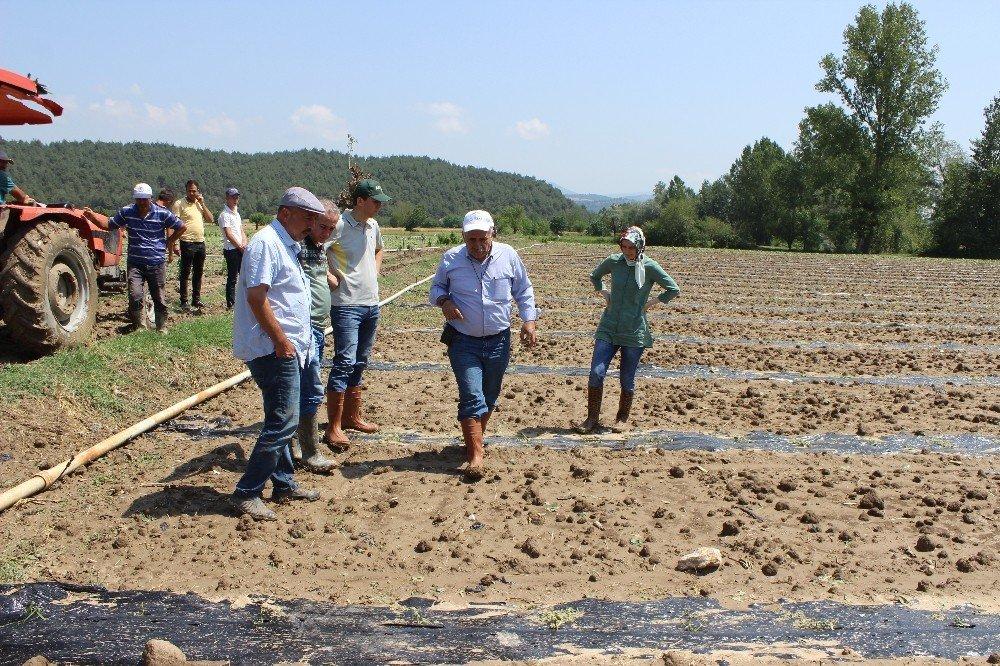 Şiddetli yağış ve dolu üreticileri vurdu