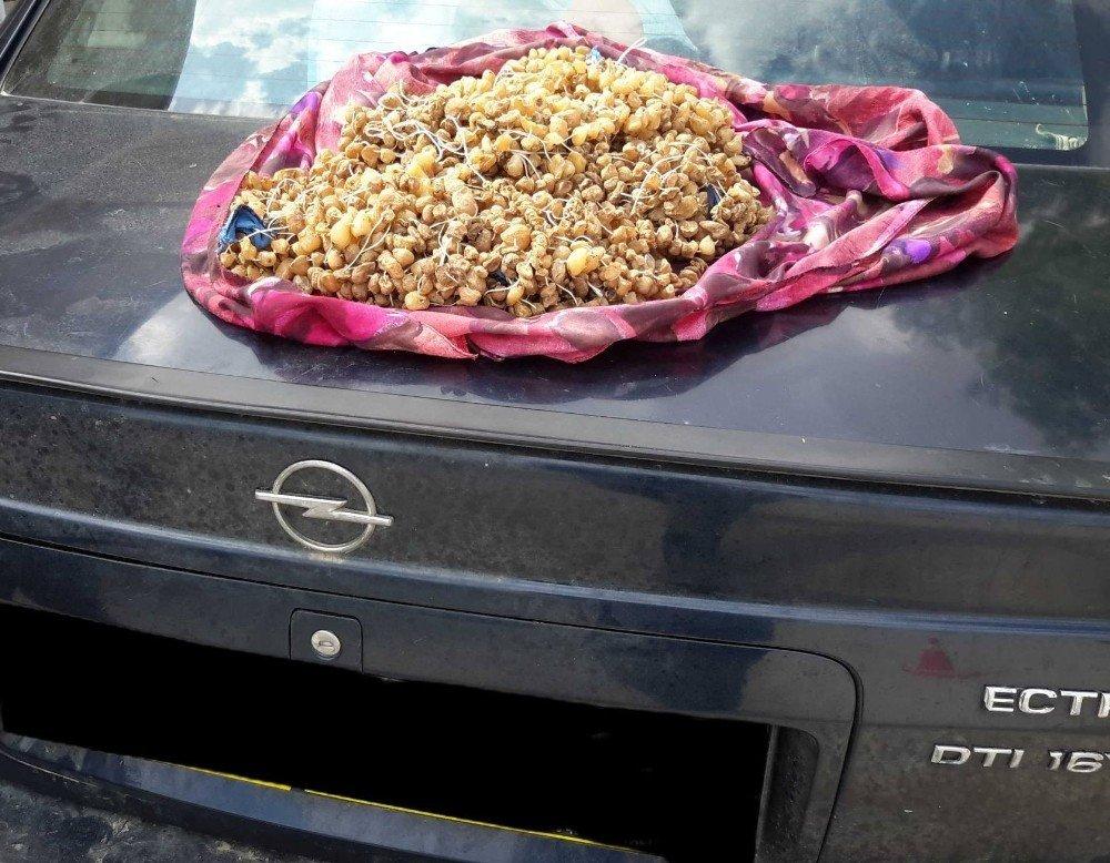 Otomobilin stepnesinde 3 kilogram kaçak salep soğanı ele geçirildi