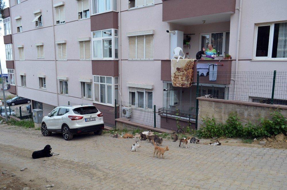 Mahalleyi hayvanat bahçesine, evini kliniğe çevirdi