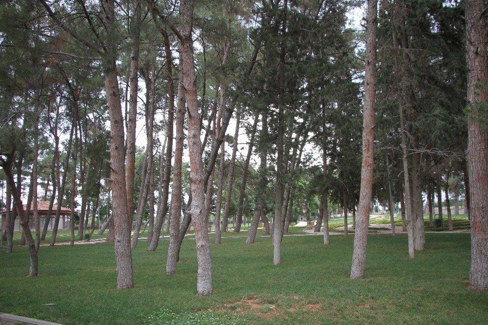 Türkiye'nin 241. tabiat parkı ilan edildi
