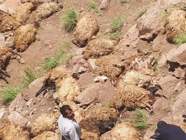 Prof. Dr. Aslan'dan500 koyunun düşüp telef olmasına ilişkin açıklama