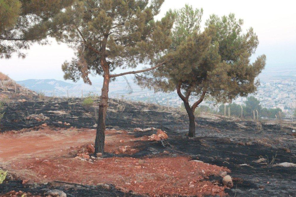 Adıyaman'da orman yangını söndürüldü
