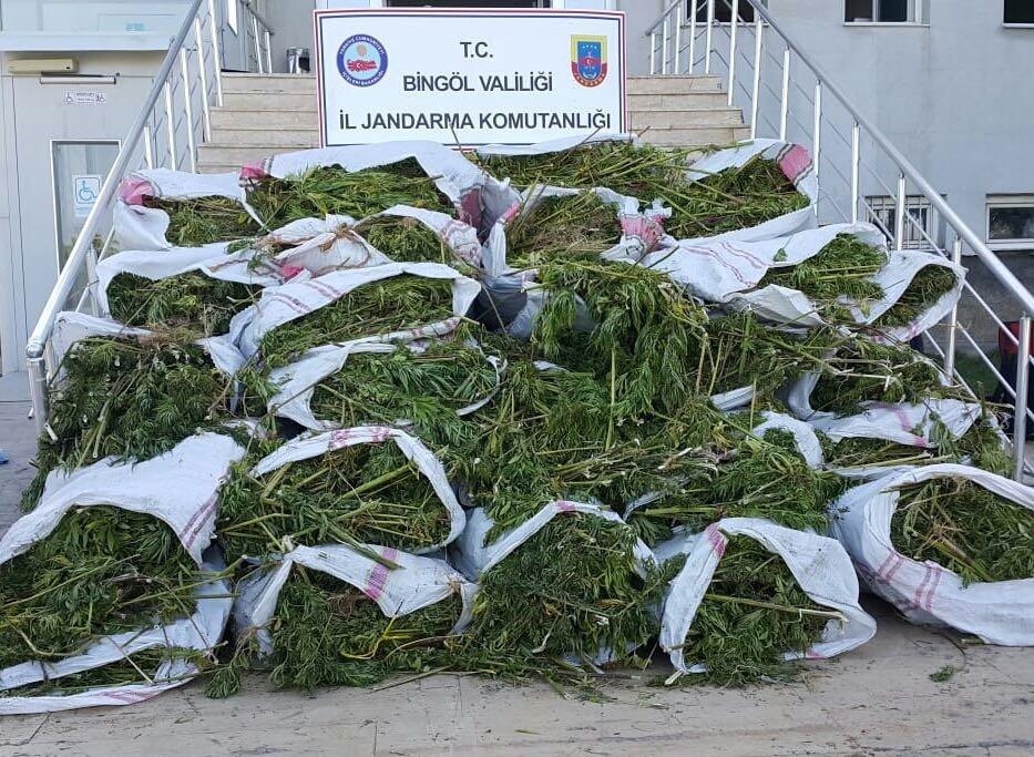 Bingöl'de 700 kilo esrar, 40 bin kök kenevir ele geçirildi