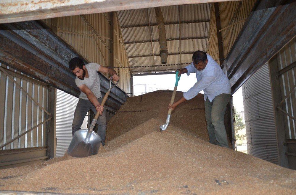 Çiftçiler, TMO'nun buğday alımından memnun