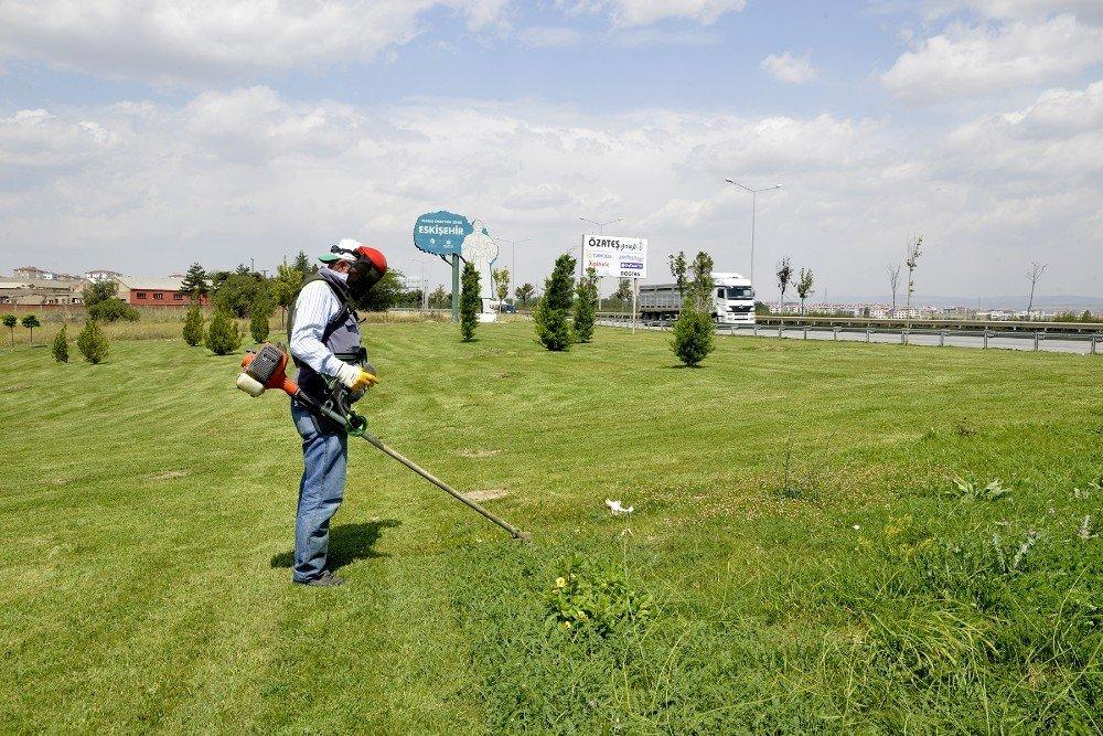 Çimler biçiliyor, yabani otlar temizleniyor