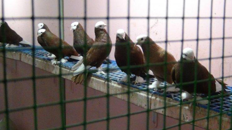 Güvercinsevenler lokali