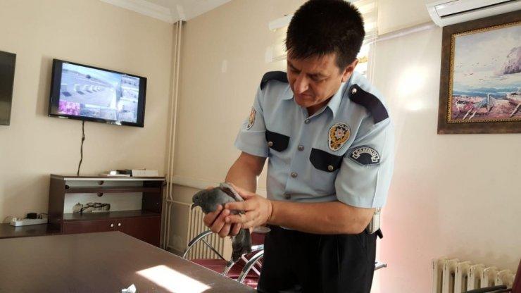 Polisler yaralı güvercini tedavi etti