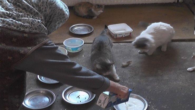 Emekli maaşıyla yüzlerce kediye bakıyor
