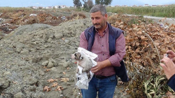 Çomar yavrularını yanmaktan canı pahasına kurtardı