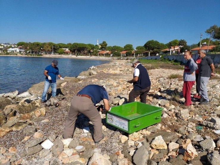 Didim'de sahil güvenlik ekiplerinden caretta caretta seferberliği