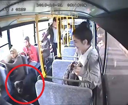 Halk otobüsüne binen köpek ortalığı savaş alanına çevirdi