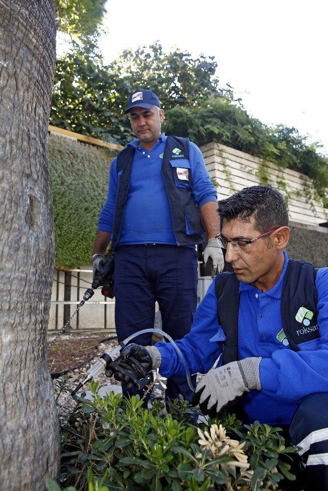 Kırmızı palmiye böceği istilasına karşı ağaçlar ilaçlanıyor