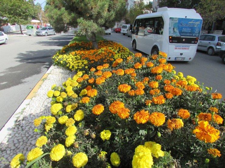 Termal seralarda 4 mevsim çiçek üretimi