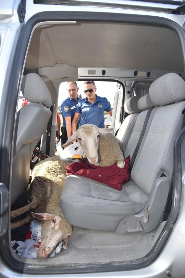 5 koyunu sünnet düğününde yemek için çalmışlar