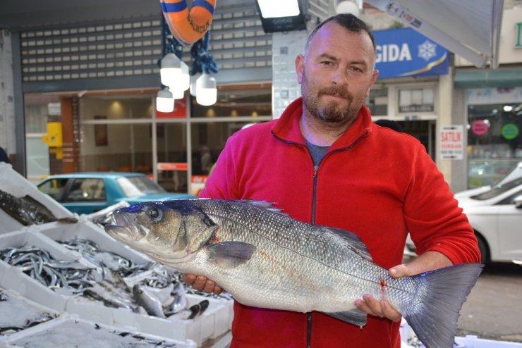 Balıkçılara 8 kiloluk levrek sürprizi