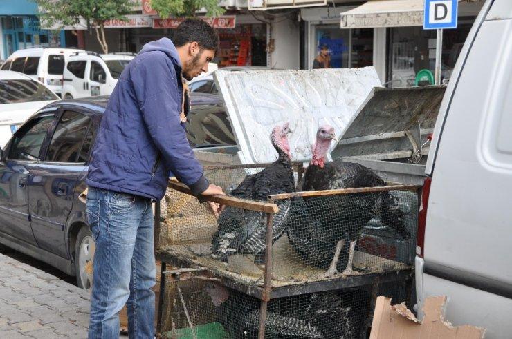 Hindi satışları artmaya başladı