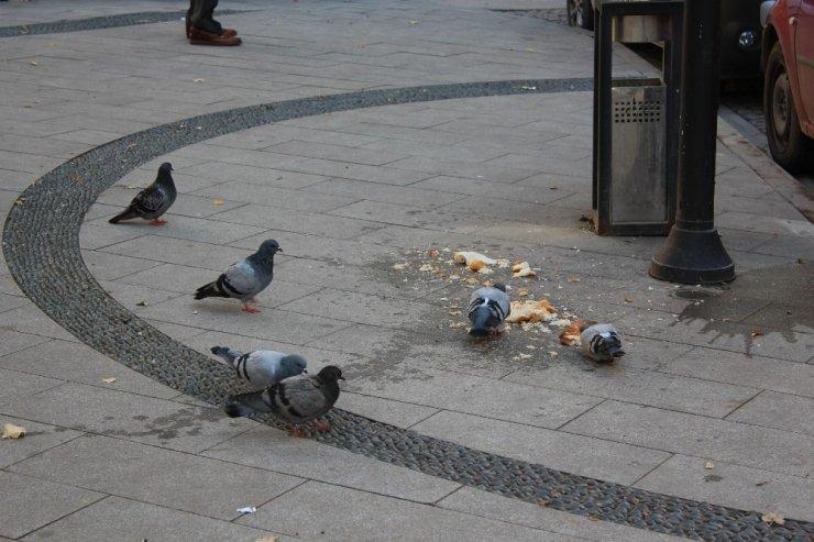 Hayvan sevgisi adına çevre kirletiliyor