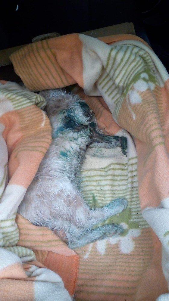 Ayakları kesik halde bulunan kedi hayatını kaybetti