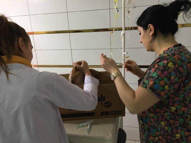 Yaralı köpeği öğrenciler tedavi ettirdi
