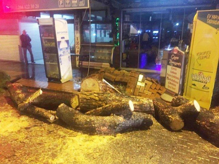 Burhaniye'de lodosa dayanamayan çam ağacı yola devrildi