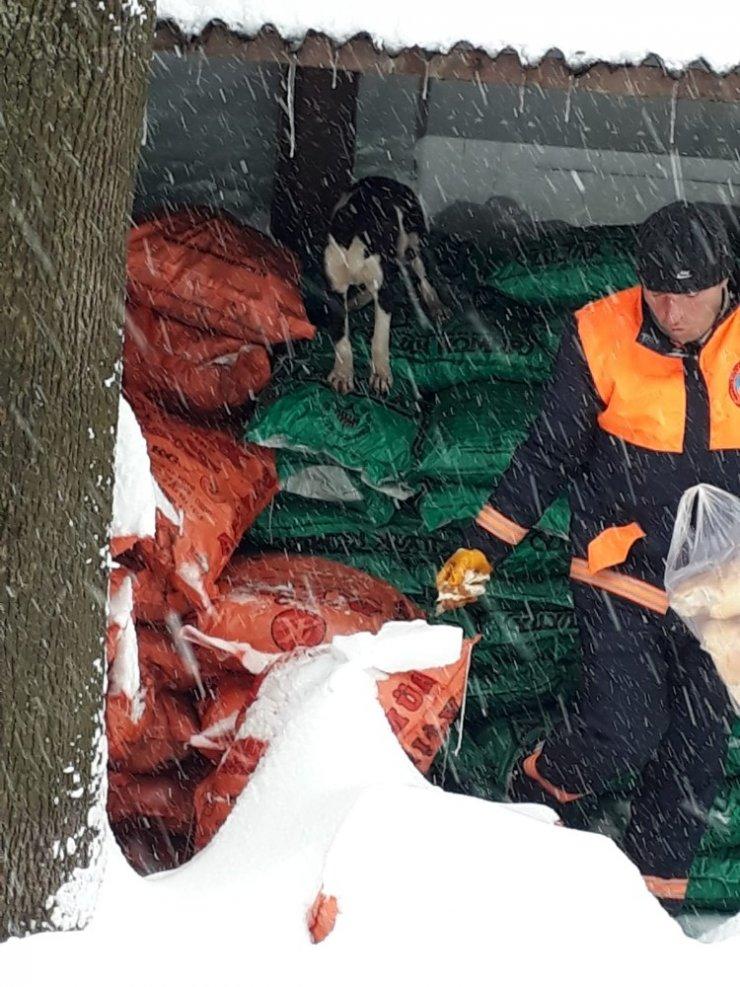 Karda aç kalan hayvanlar için belediye seferber oldu