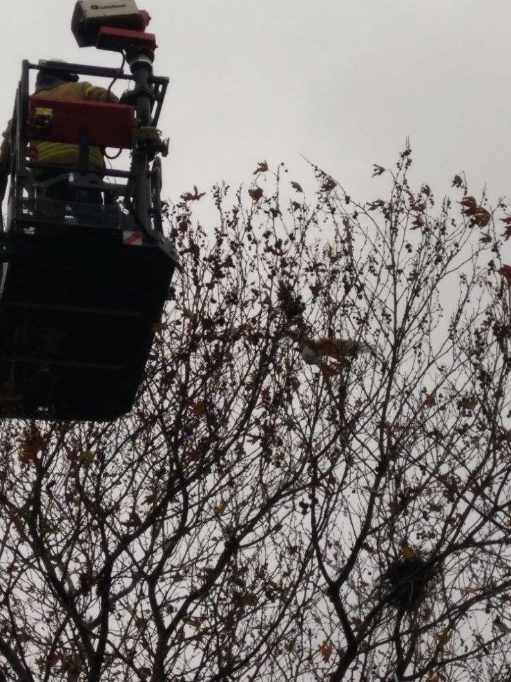 Ayağına takılan olta nedeniyle ağaçta mahsur kalan martının kurtarılma anı kamerada