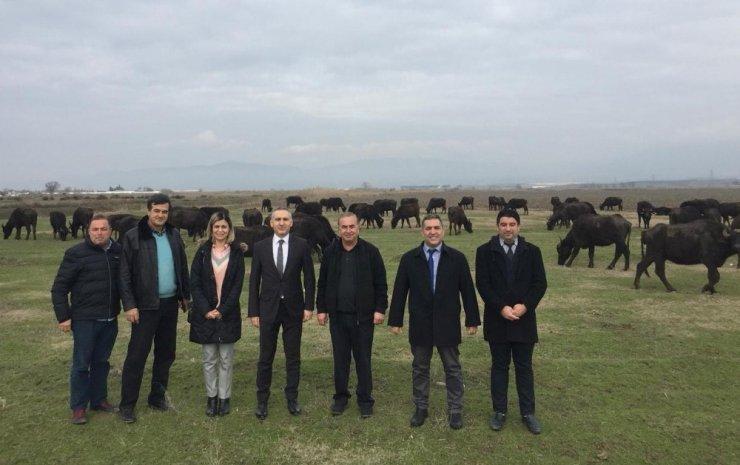 Öztürk'ten Salihli'de manda çiftliğine ziyaret