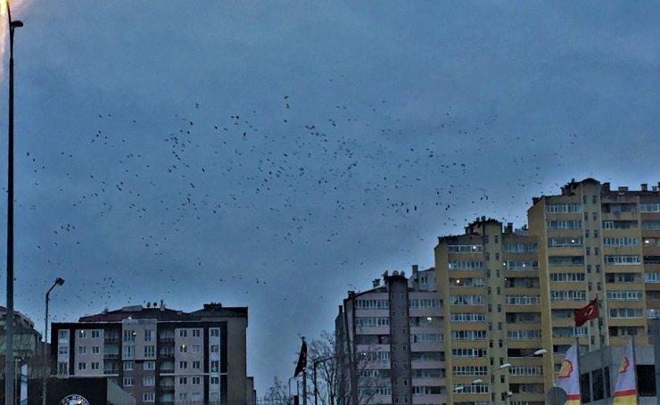 Kuşların gökyüzünde dansı, görsel şölen oluşturdu