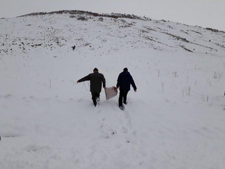 Elazığ'da yaban keçileri için yem bırakıldı