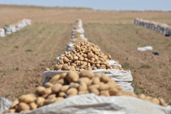 'Patates ithalatı nedeniyle çiftçiler endişeli'