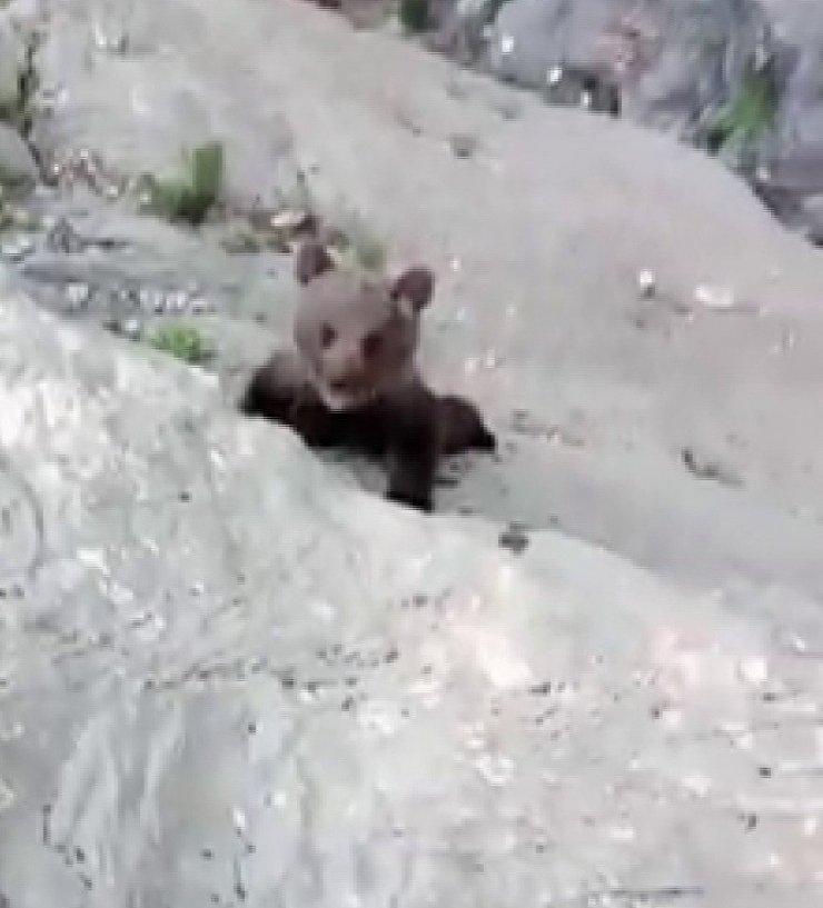 Yavru ayıyla fotoğraf çektirdikten sonra doğaya bıraktılar