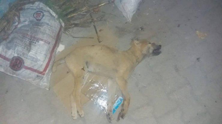 """Köpeği yaralayıp çöpe attı, """"Tavuklarıma saldırdı"""" dedi"""