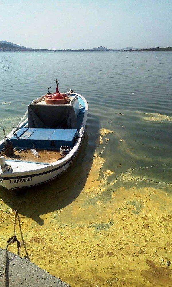 Ayvalık Belediyesinden 'plankton' açıklaması
